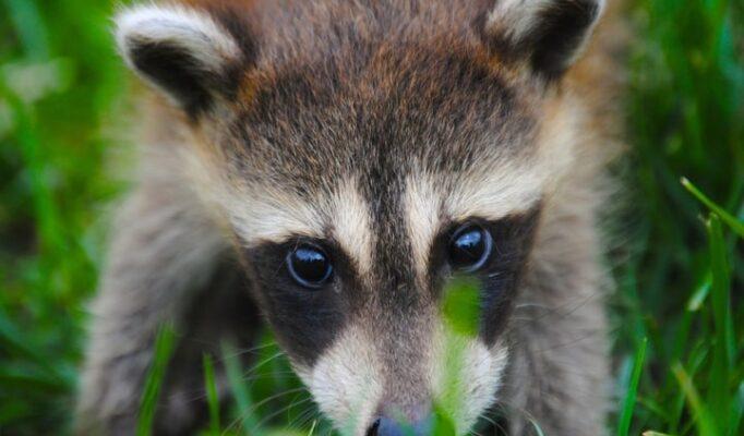 nature-animal-cute-wildlife-wild-mammal-102130-pxhere.com